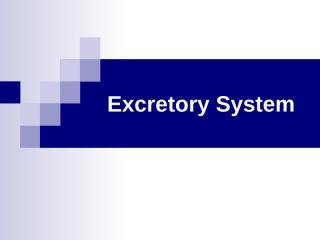 12, Excretory System.ppt